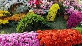 4K- Beautiful flower design and decoration ideas - flower festival in Chiang Mai, Thailand
